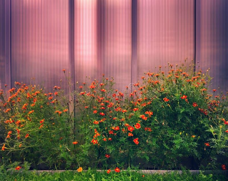 花边界在庭院里 免版税库存图片