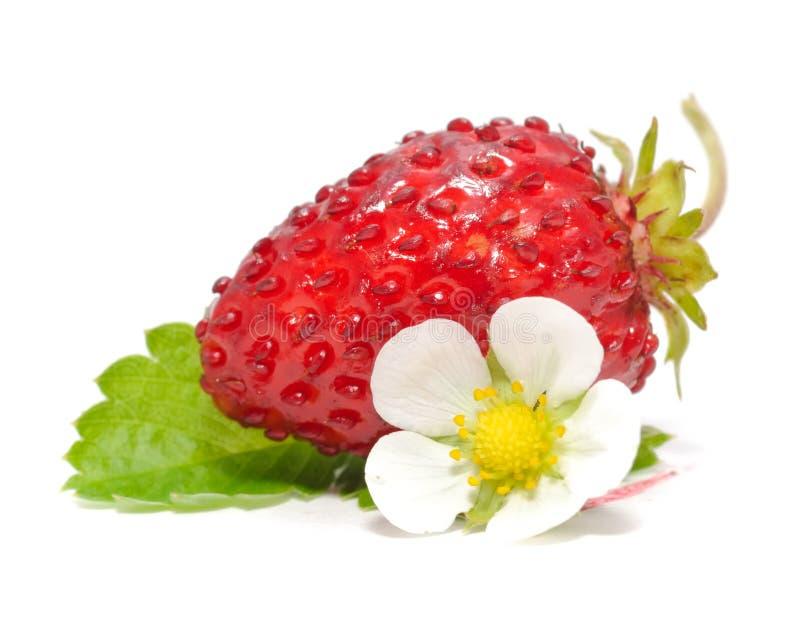 花通配叶子的草莓 免版税图库摄影