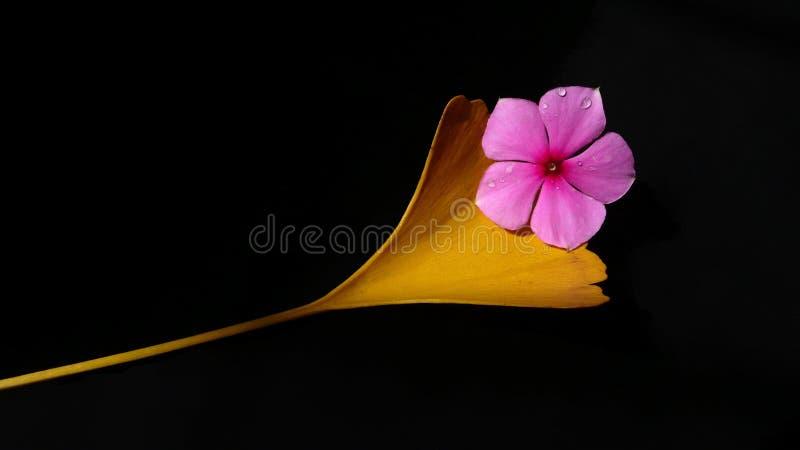 花金黄叶子紫色 库存照片