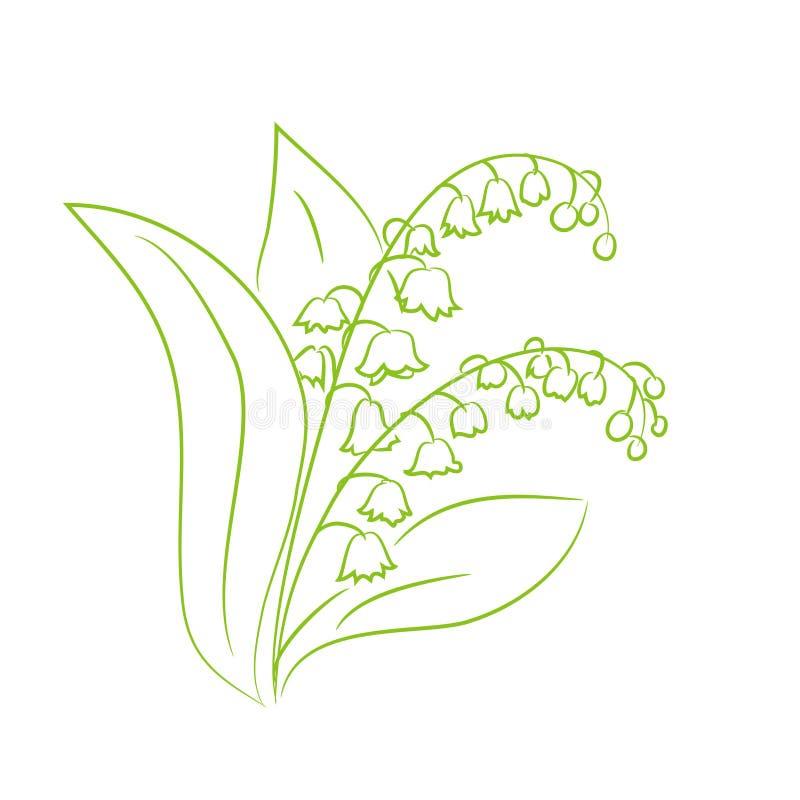 花铃兰的剪影 向量例证