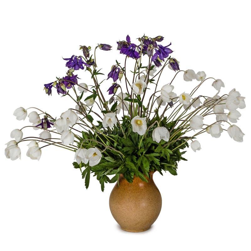 花银莲花属和集水量花束在黏土水罐,隔绝在白色 库存图片