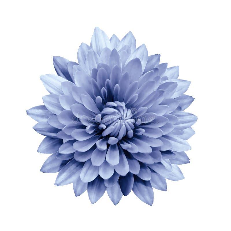 花隔绝了在白色背景的浅兰的大丽花与裁减路线 特写镜头 免版税库存图片