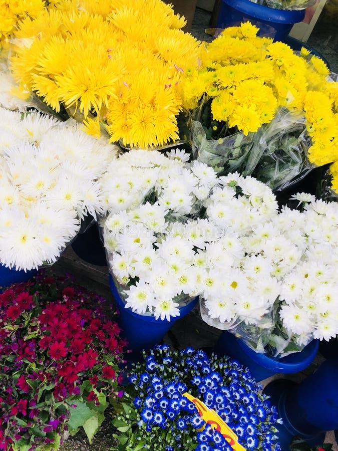 花颜色爆炸多颜色春天在天空中 免版税库存图片