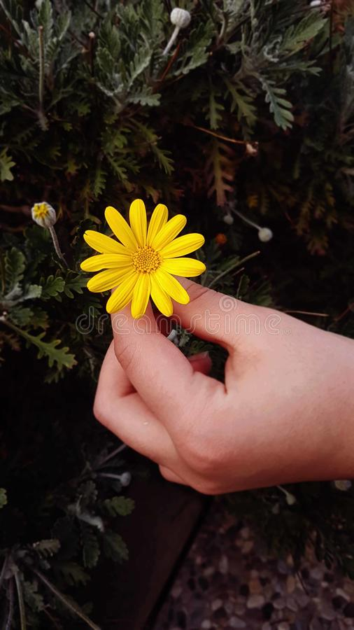 花黄色白色植物 免版税库存照片
