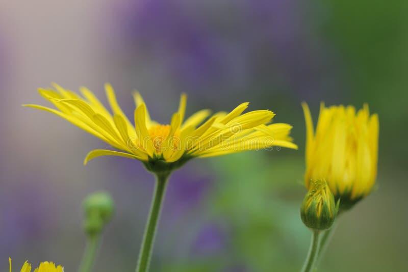 花,宏观摄影 图库摄影