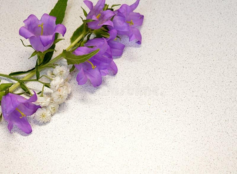 花,弹簧,被隔绝,紫色,自然,花,植物,白色,紫罗兰,花卉,开花,绿色,蓝色,桃红色,叶子,绽放, campanul 图库摄影