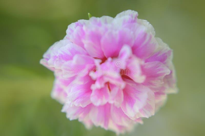花,柔和的焦点 免版税库存照片