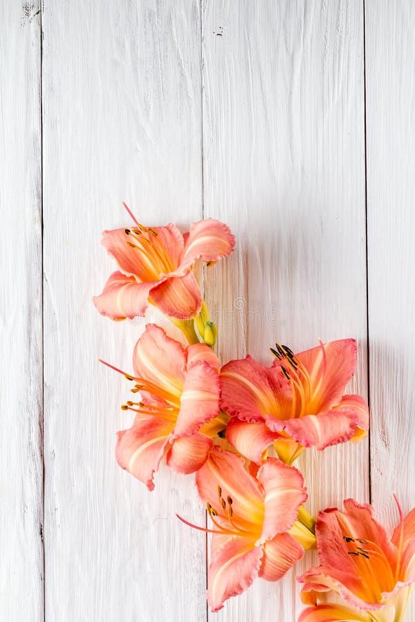 花,背景白板框架  库存图片