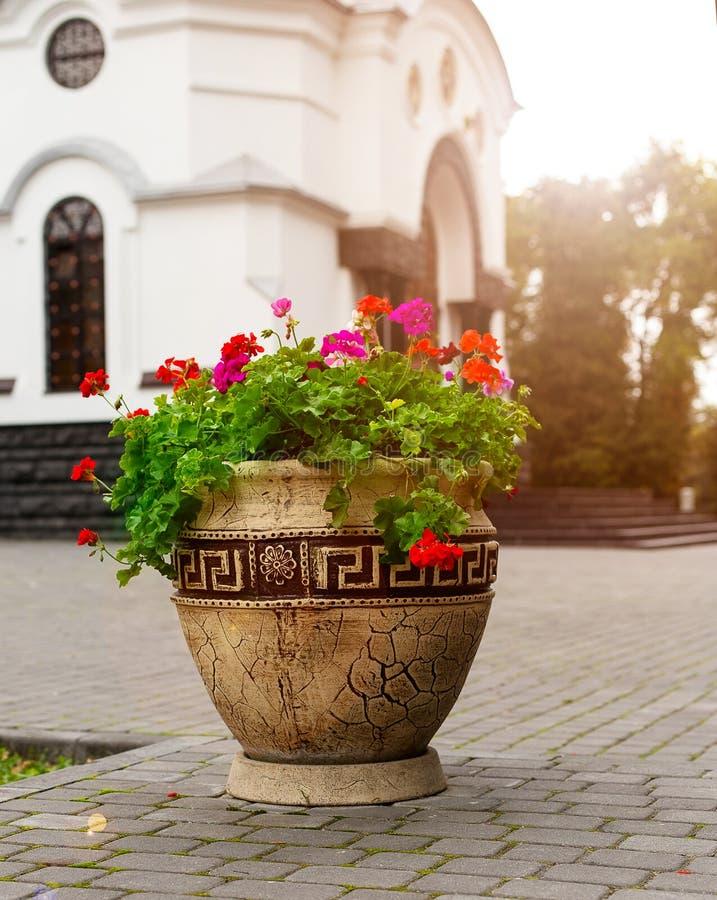 花,花圃喇叭花 免版税库存照片
