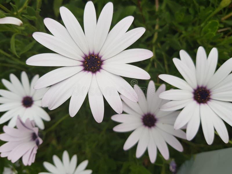 花,草,春天,在塞浦路斯,象雏菊的花的好日子 免版税库存图片