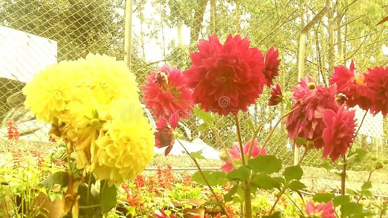 花从事园艺 库存照片
