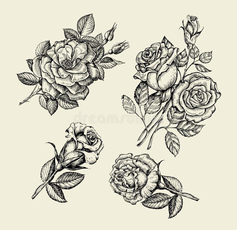 花 手拉的剪影花,上升了, dogrose,野玫瑰果,花卉样式 也corel凹道例证向量 库存例证