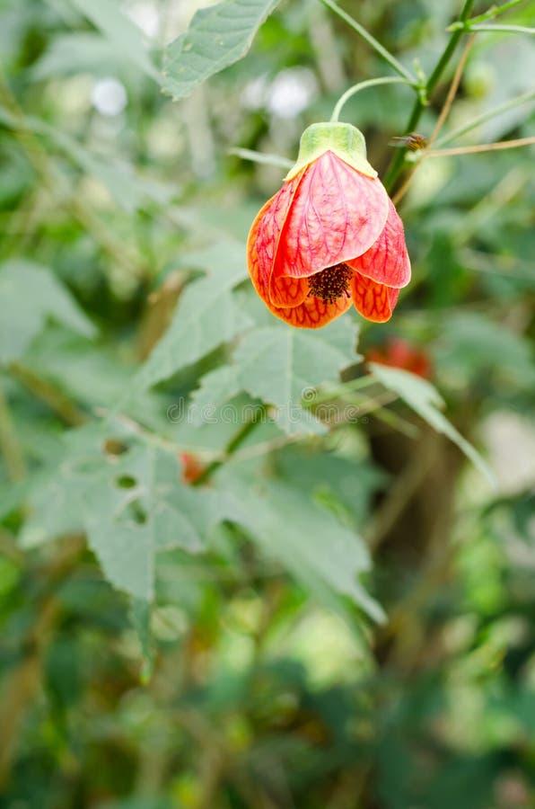 Download 花绿色留下红色 库存照片. 图片 包括有 次幂, 叶子, 本质, 开花, 鬃毛, 绿色, 自然, 激情, 利息 - 59112722