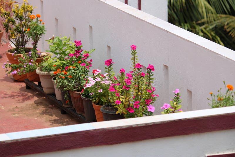 花colourfull自然庭院桃红色 库存照片