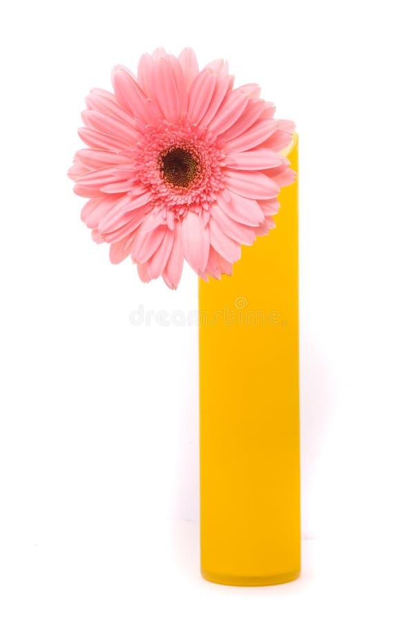 花gerber粉红色花瓶黄色 免版税库存图片