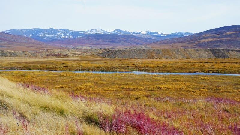 芳香五颜六色的寒带草原撒布与花 免版税库存照片