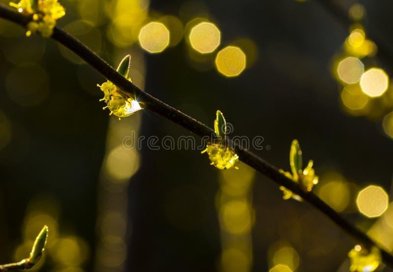 芽和雨小滴 免版税库存照片