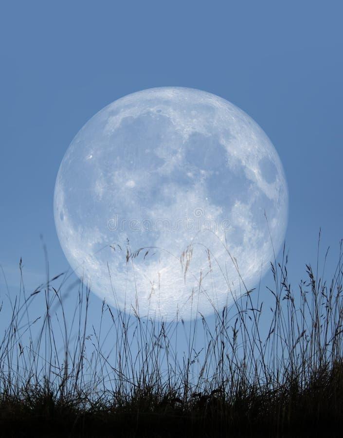 苍白的月亮 库存例证