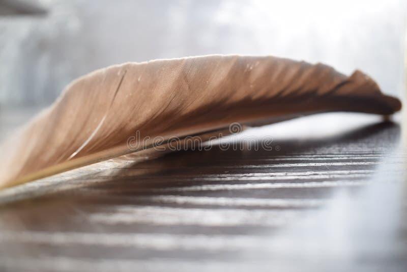 黑苍鹭羽毛在木垫的 免版税库存照片