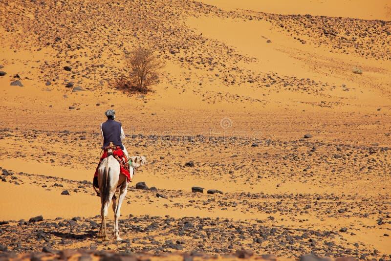 苏丹人骆驼车手 库存照片