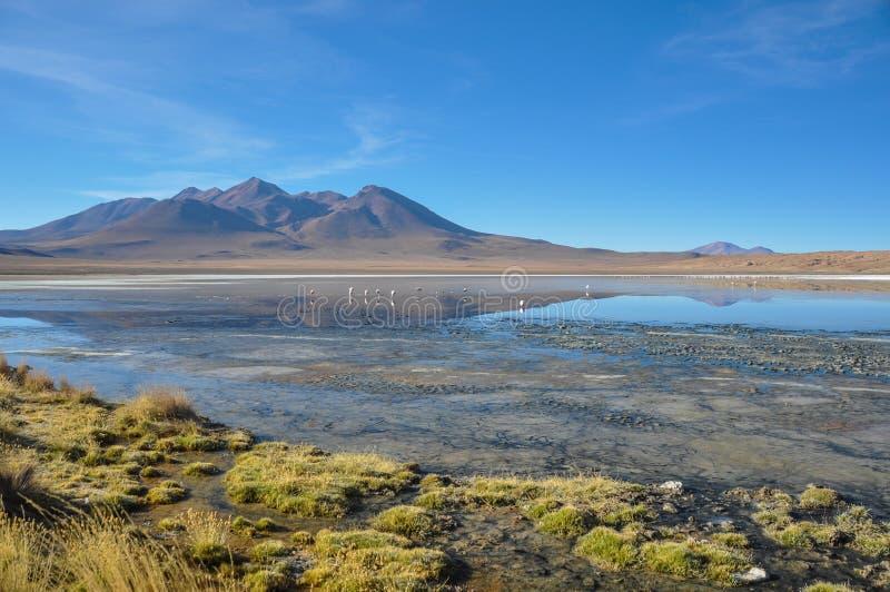 苏尔Lipez,南玻利维亚华美的风景  库存照片