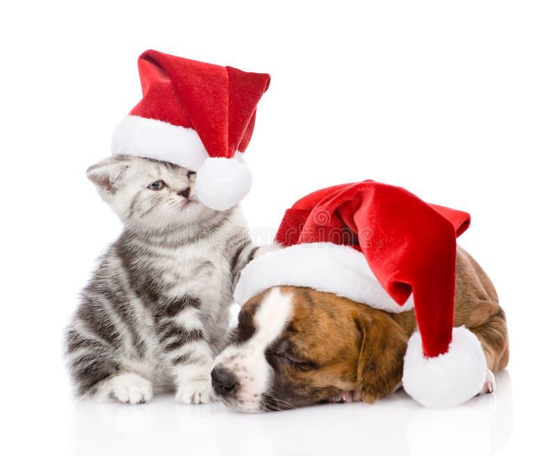 苏格兰小猫和小小狗与圣诞老人帽子 查出 免版税库存照片