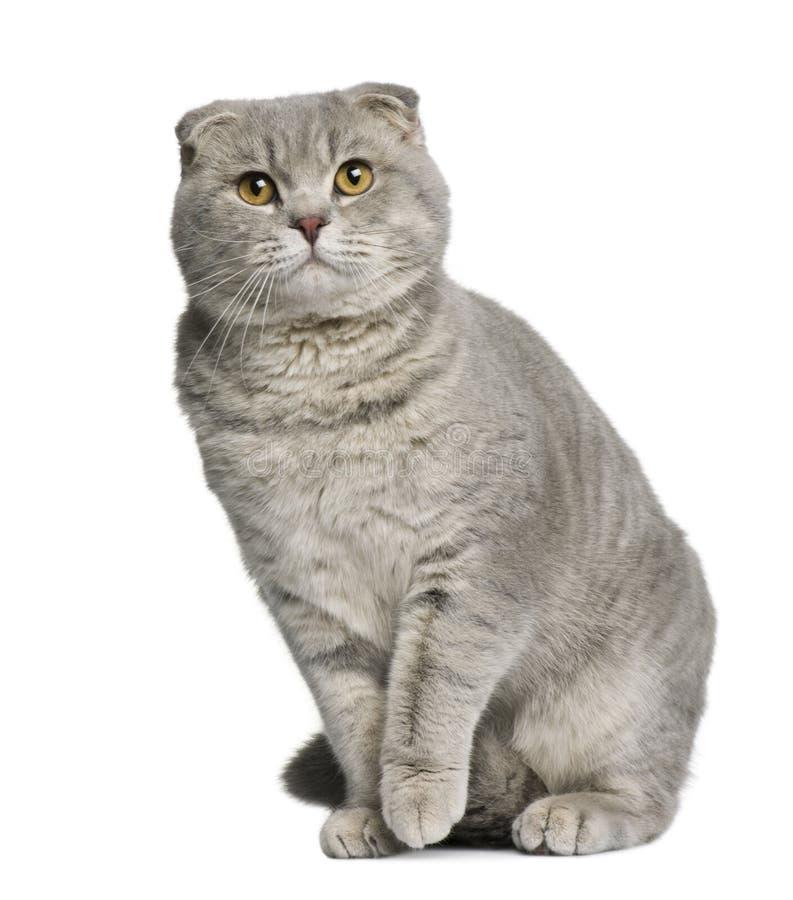 苏格兰8个猫折叠的月 免版税库存图片