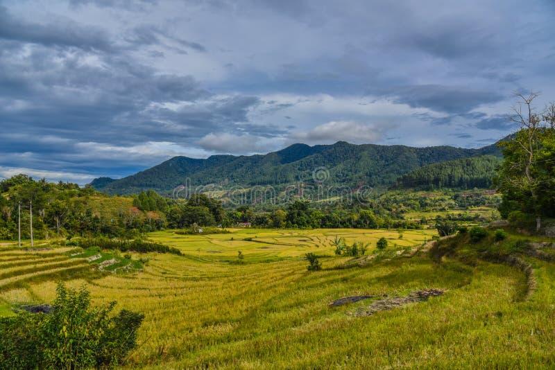 苏门答腊美好的风景  库存照片