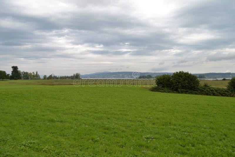 苏黎世河,多云天空,在其他银行的大厦河岸的绿色草甸  免版税库存照片