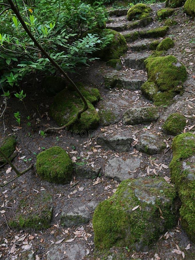 苔藓覆岩植物园古隐式装饰石楼梯 免版税库存照片