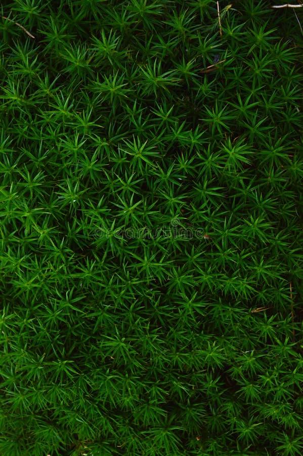 苔藓,机械,木,花,星,墙纸 免版税图库摄影