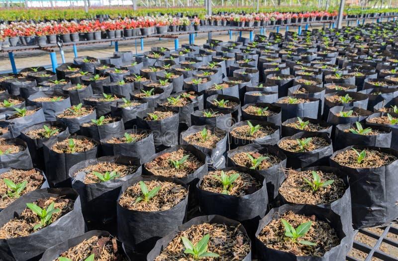 苗圃植物 库存图片