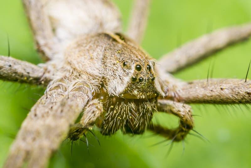 苗圃蜘蛛网 库存照片