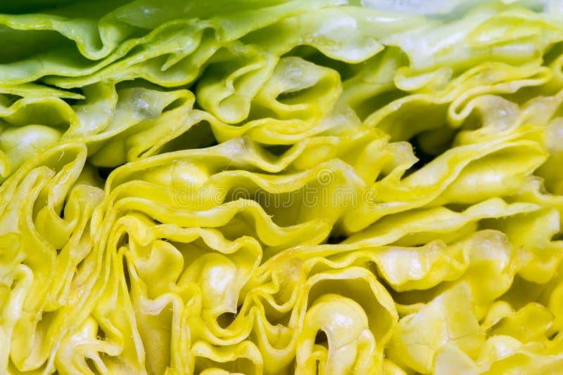 莴苣叶子 库存照片