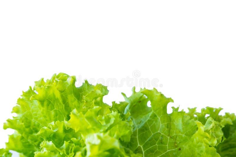 莴苣和白色背景 免版税图库摄影