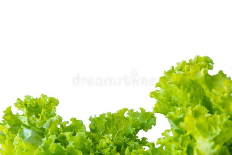 莴苣和白色背景 免版税库存照片