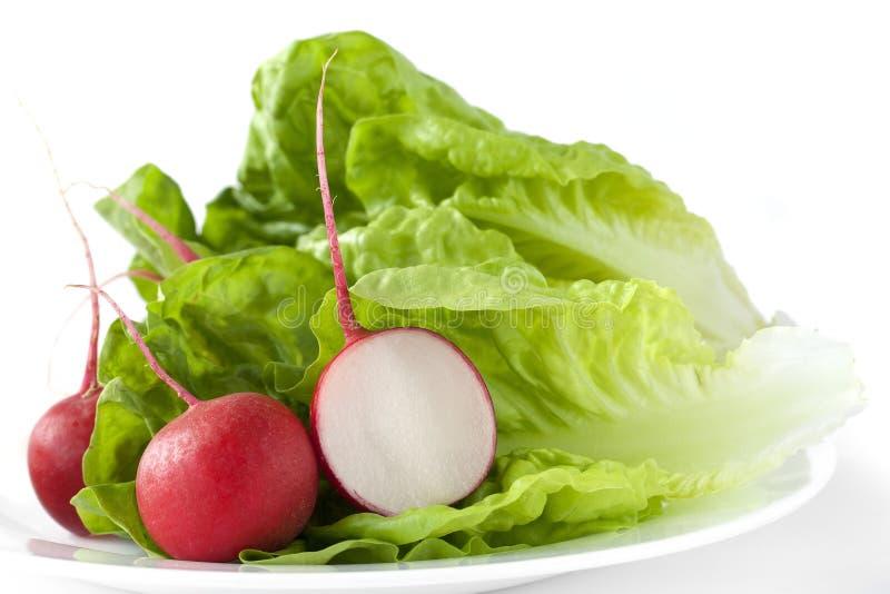 莴苣和萝卜 免版税库存照片