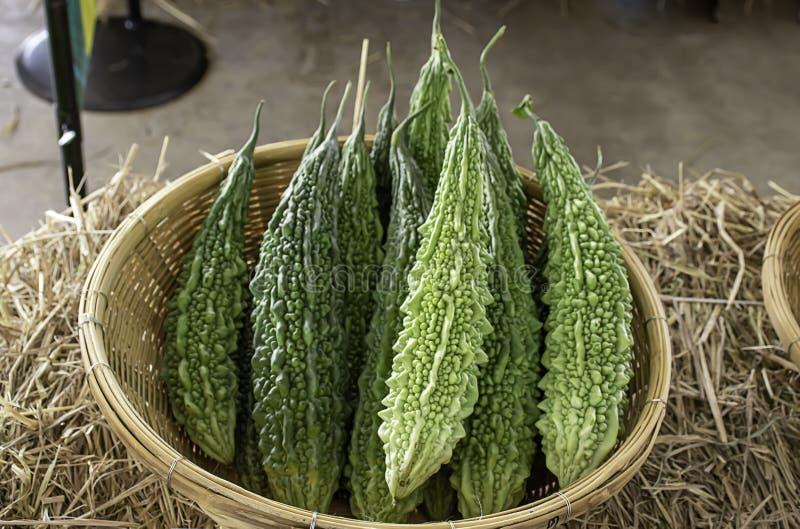 苦涩金瓜新鲜从竹篮子的庭院 免版税库存图片