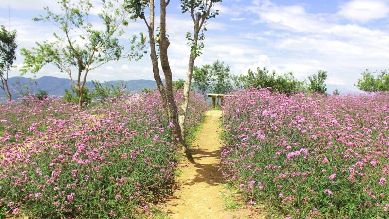 苦涩金瓜特写镜头视图在菜园概念的在白色背景 库存图片