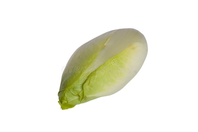 苦苣生茯饮食 免版税库存图片