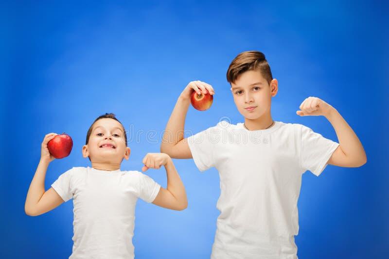 英俊的小男孩用两个红色苹果 在蓝色背景的演播室画象 图库摄影