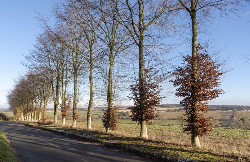 英国乡下在汉普郡,英国南部 免版税库存照片