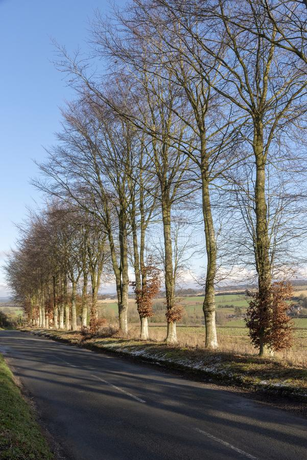 英国乡下在汉普郡,英国南部 图库摄影