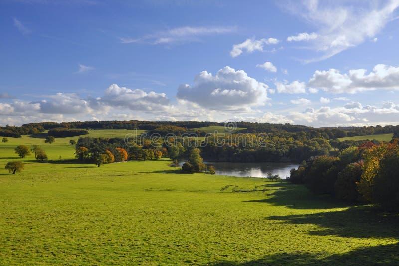 英国乡下: 绿色域、结构树和湖 免版税图库摄影