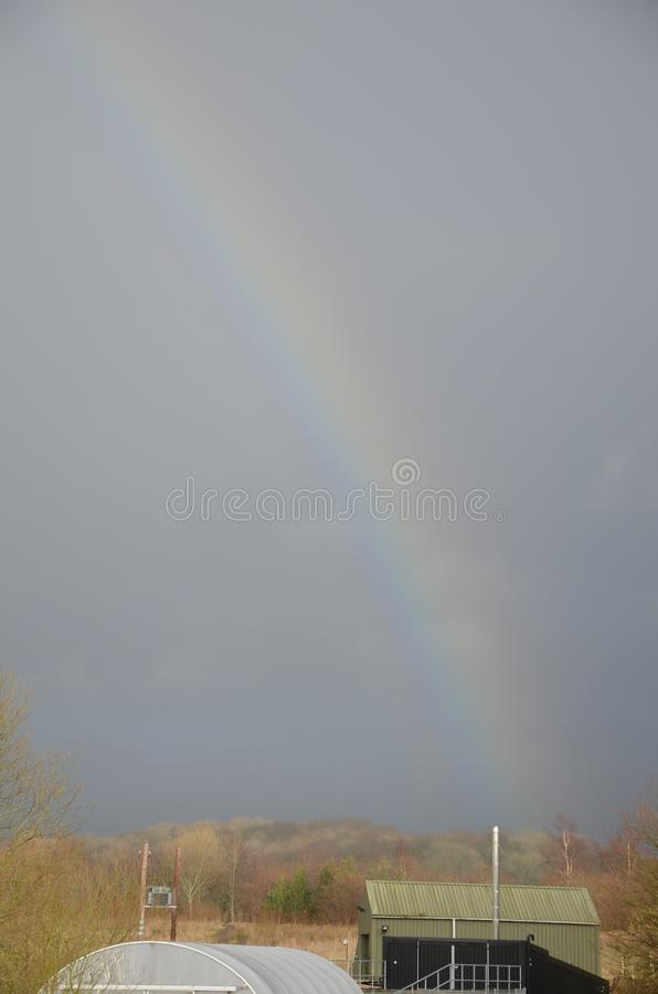 英国兰开夏布霍尔斯湖中天鹅 库存照片