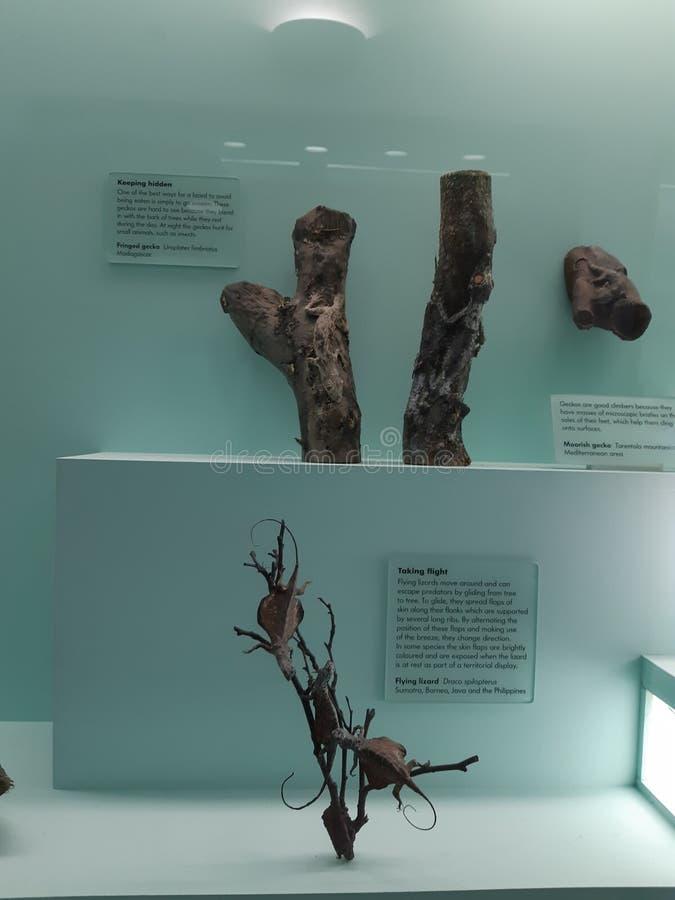 英国历史记录自然伦敦的博物馆 免版税库存照片