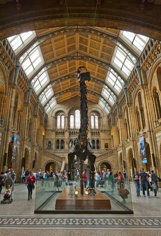 英国历史记录自然伦敦的博物馆 免版税库存图片