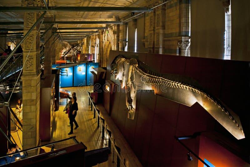英国历史记录自然伦敦的博物馆 库存照片