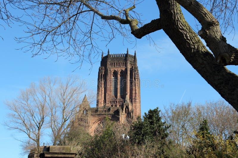 英国国教大教堂利物浦 库存图片