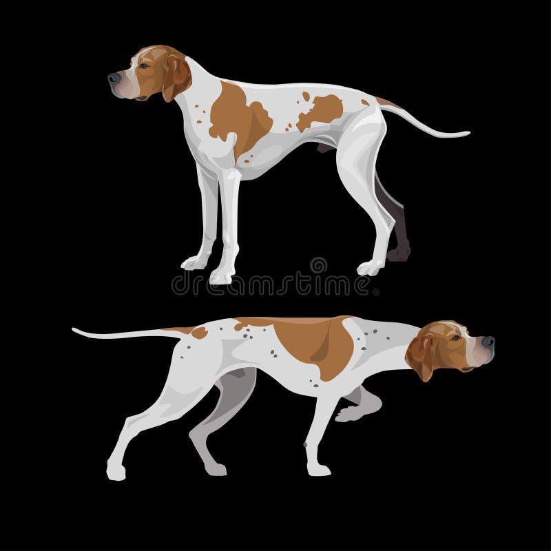 英国尖狗 向量例证